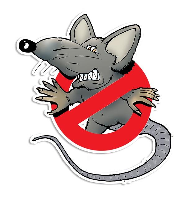 rat-4747230_640.jpg