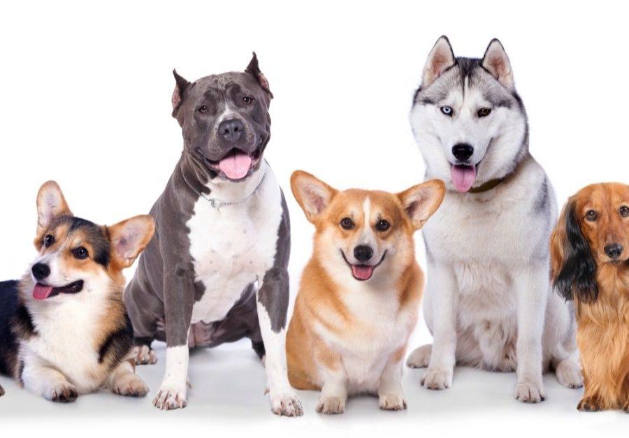 Quels sont les accessoires indispensables pour un chien.jpg